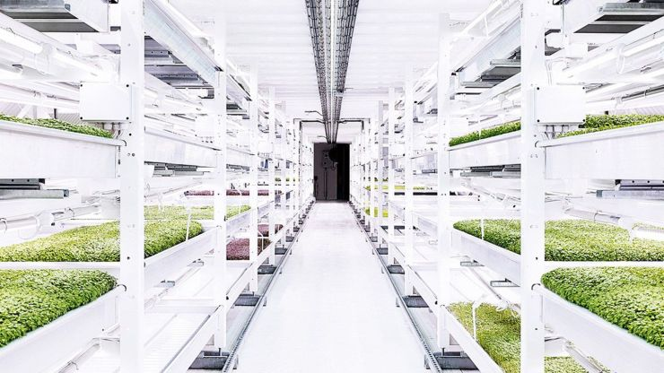 Organic Food being grown in London's underground
